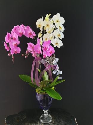 Kadehte Orkide bahçesi