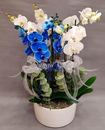 Mavi Beyaz Orkide Arajmanı-Seramik Saksıda