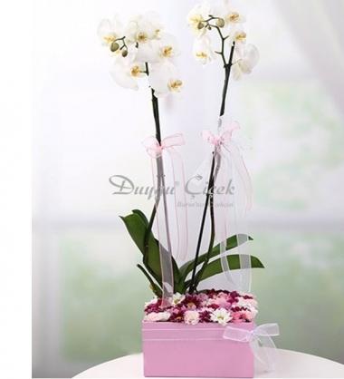 Beyaz Orkide Arajmanı-Pembe Kare Kutuda