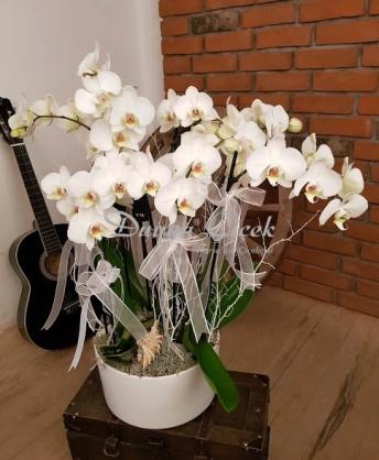 Beyaz Orkide Bahçesi Büyük