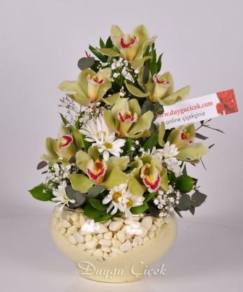 Kandil Orkideler