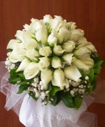 Gelin Çiçeği Beyaz Büyük Boy