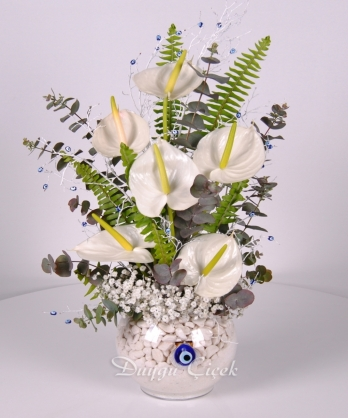 Asil Beyaz Çiçek-Anthorium